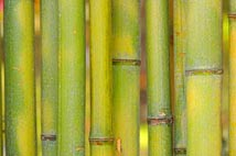 bamboo shoots used in mattress cover fabric